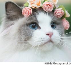 あなたが美しいと思う物!!