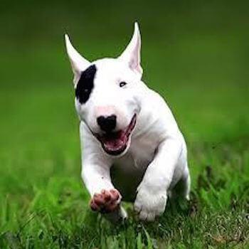 麻薬ドキュメンタリー番組の撮影中、「コカインの塊」を食べた犬が凶暴化! 飼い主を噛み殺してしまう事件に発展