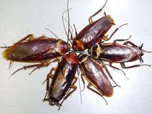 ゴキブリを可愛い言い方に変えよう♪