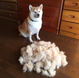寒い時期の毛の処理