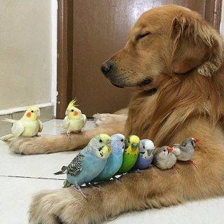 【ネタトピ】動物だけの○○会を開催