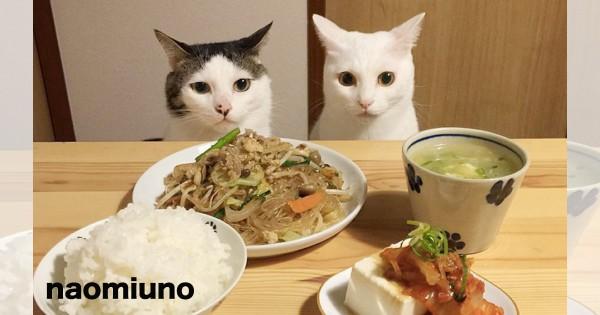 夕飯何品作ってますか?