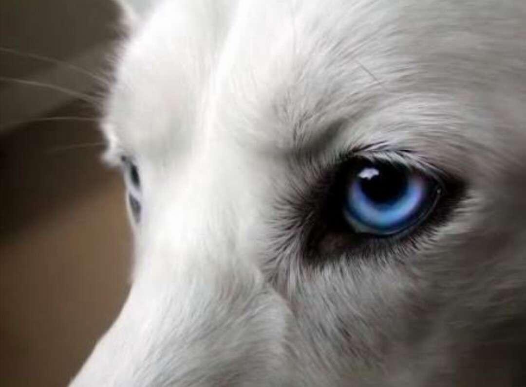 青系の目を見たい!