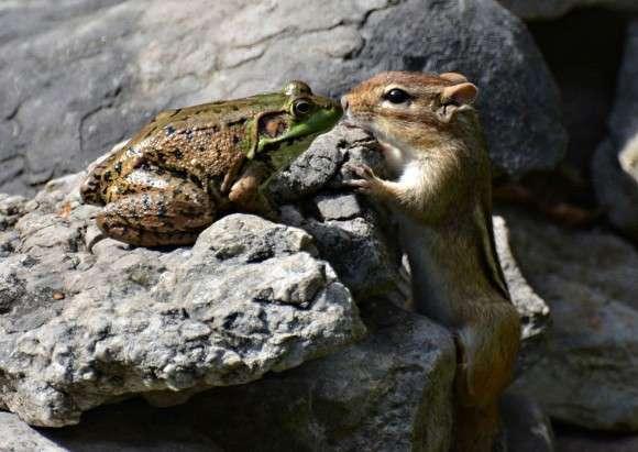 異種動物の友情画像をはるトピ