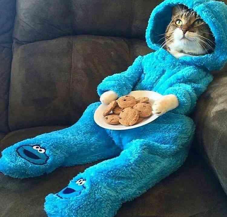 お腹は空いてるのに、何が食べたいか分からない