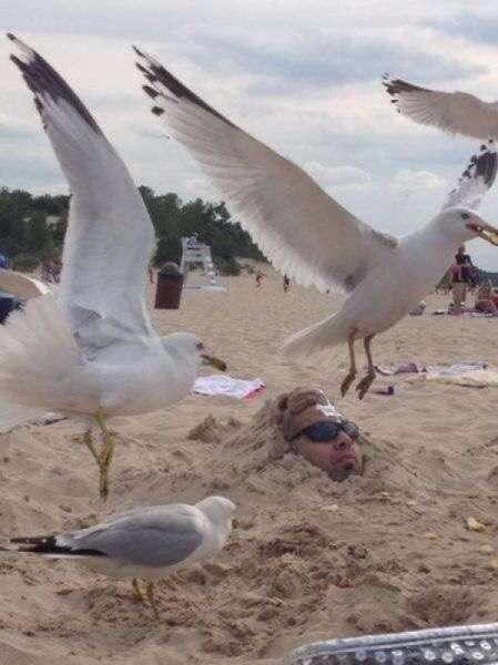外で鳥のフンが落ちてきた時の対処法