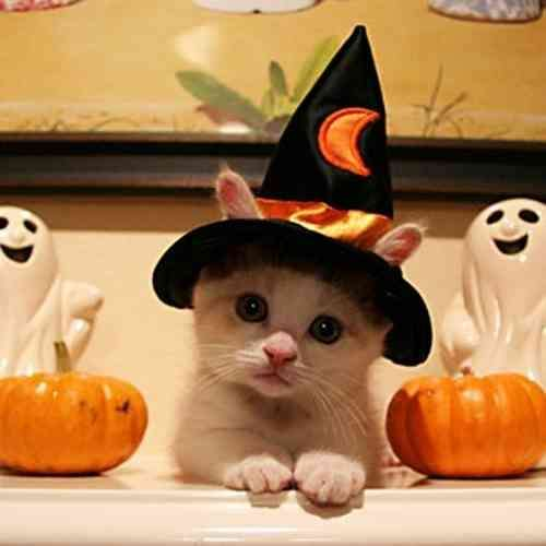 秋と動物が一緒に写ってる画像を貼って癒されましょう!