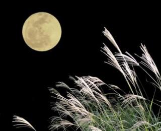 秋の夜長をのんびり過ごすトピ