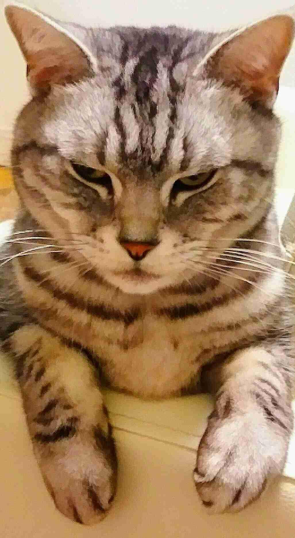 ペットの1番のお気に入り画像を貼るトピ