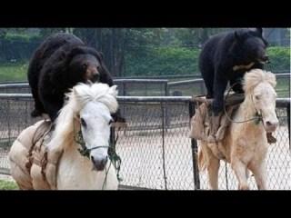 ガルちゃん動物園