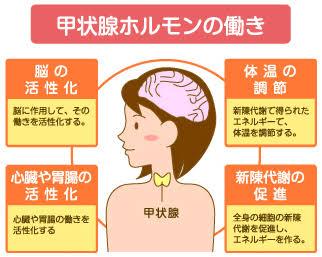 甲状腺疾患について