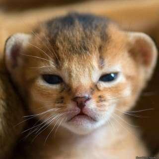 動物の面白い表情が見たい
