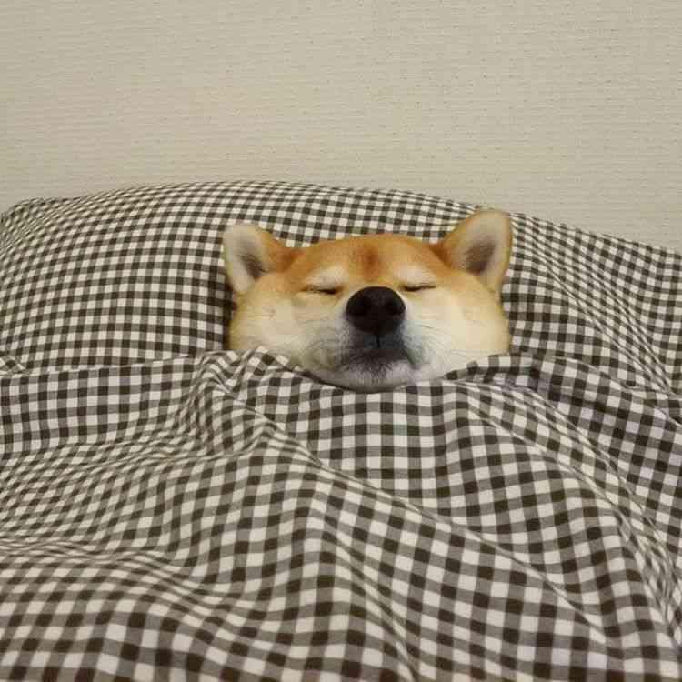 最近ちゃんと寝れてますか?