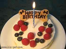 ペットのお誕生日に何をされますか?