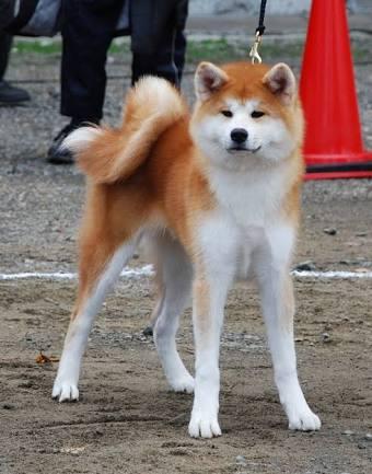 【犬について】犬種による性格の違い
