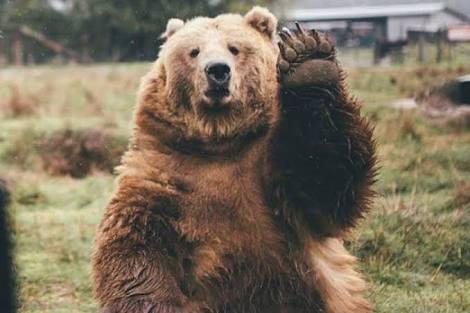 大きい動物が好きなのです