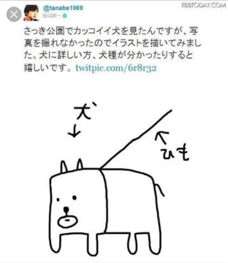 可愛い犬の画像ください