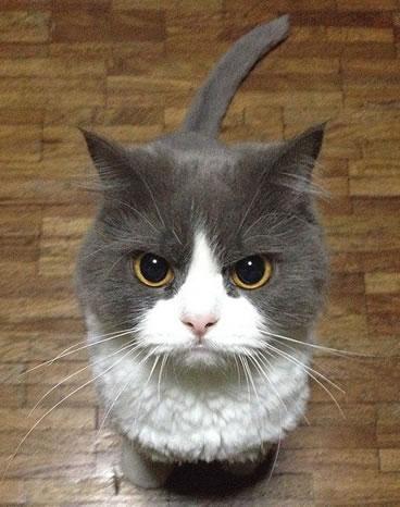 猫のしつけ相談トピ