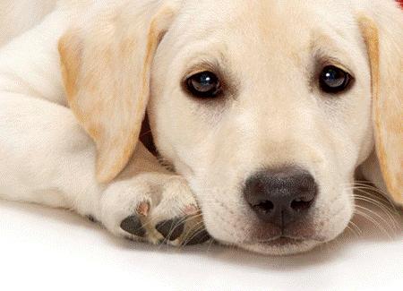 犬がいる生活はどんな感じ?