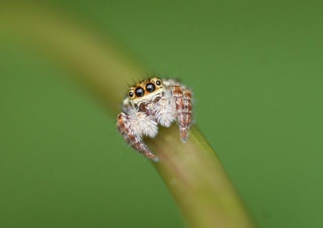 クモがでたらどうしていますか?