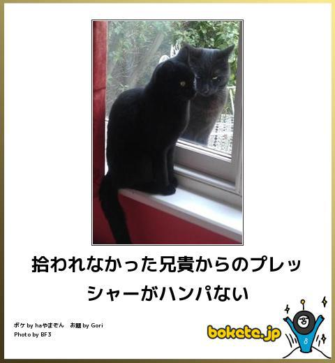 猫が外に出たがる。