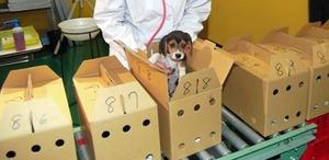カリフォルニア州で保護犬以外のペット販売を禁止する法案が成立!2019年から施行