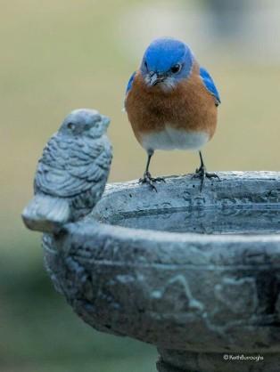 鳥が好きな人