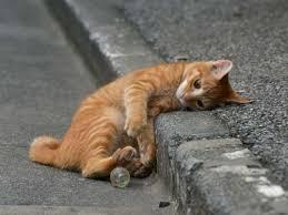 猫あるある語りたい!