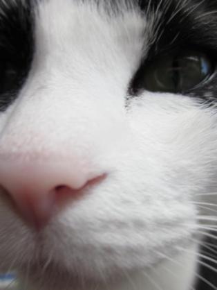 猫好きがやってしまいがちな事
