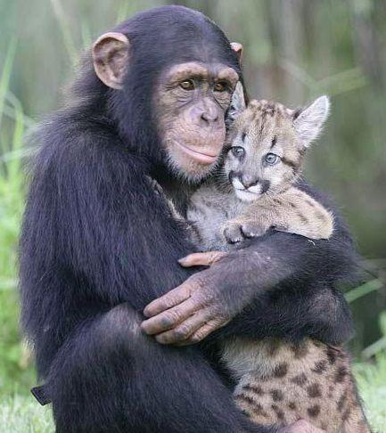 【癒し】動物がハグしている画像が集まるトピ【可愛い】