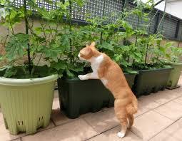 家庭菜園を語ろう!