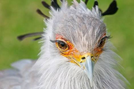 鳥の画像を貼っていくトピ
