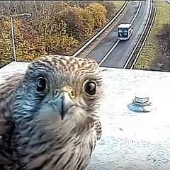 カメラ目線の動物の画像