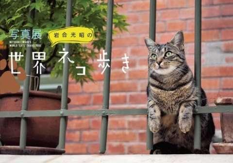 岩合光昭の世界ネコ歩き見てる人〜