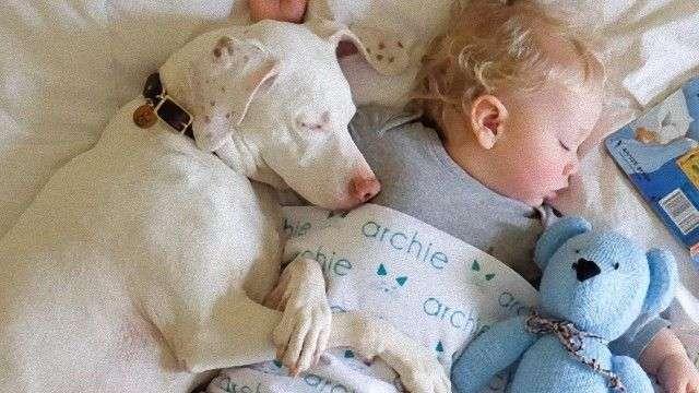 家族ができた幸せってこういう顔 里親が見つかった保護犬が喜び爆発の表情に
