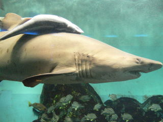 【画像】水族館にいる動物を愛でるトピ