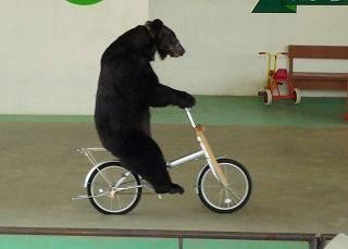 自転車に乗れない人
