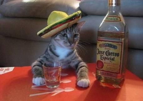 がルちゃん専用スナックするからみんな飲みにきて歌ったらー?