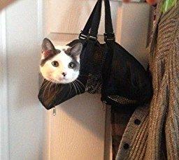 バッグに必ず入れている物ありますか?