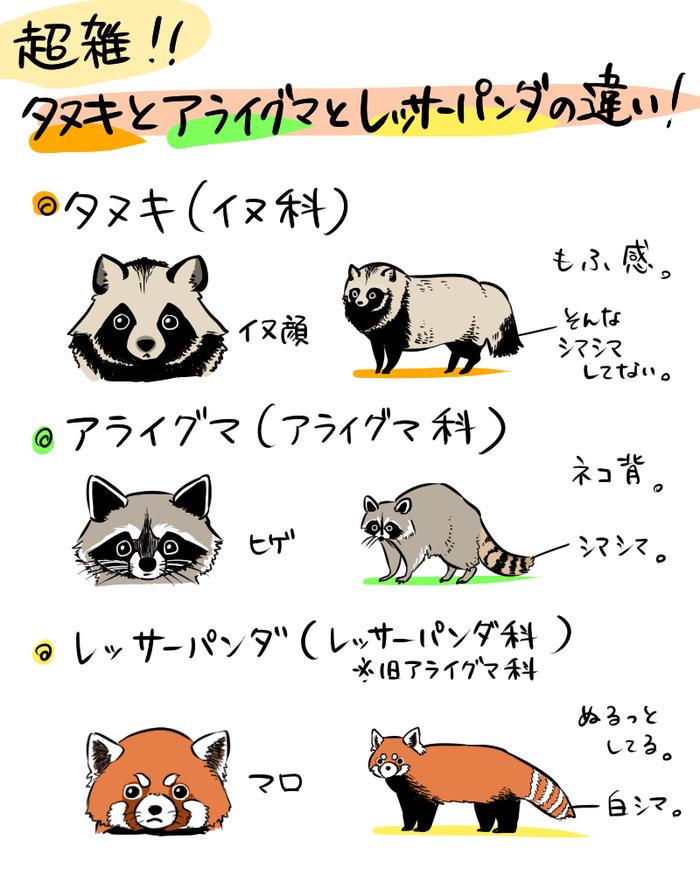レッサーパンダの写真がみたい!