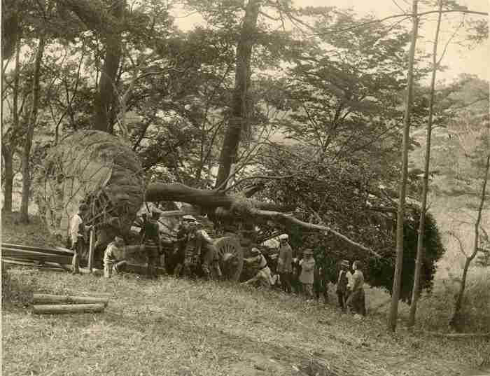 伐採するの?「世界一のツリー」催し後の行方巡りネット騒然