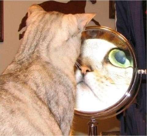 外出先の鏡と家の鏡で違って見える。。