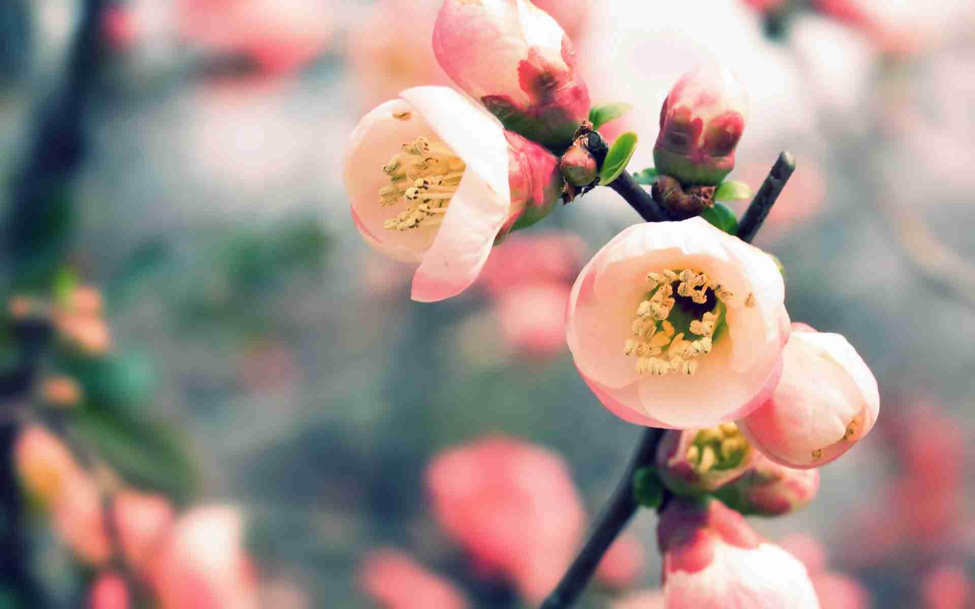 美しい日本語と写真を楽しむトピ