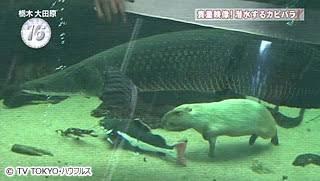 オススメの水族館