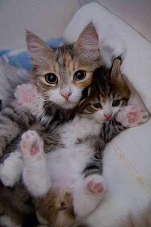 猫が可愛い過ぎて困っちゃう