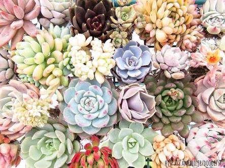 【観葉植物、多肉植物】植物育ててる人〜【家庭菜園、ガーデニング】