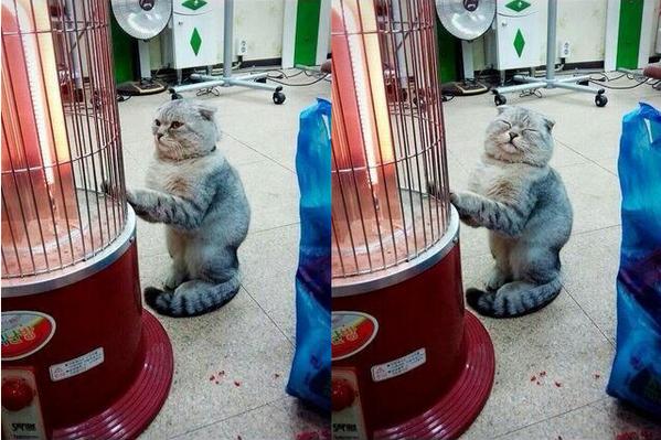 寒がりな猫エピソードや画像