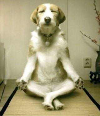 【雑談】動物になりきって話をするトピ【ネタ】