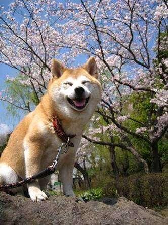 [犬の日]お気に入りの犬画像