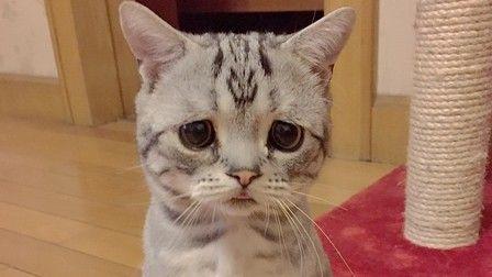 悲しい目をしているイケメンが見たい